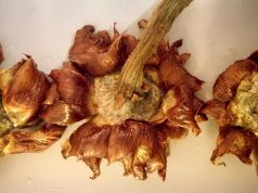 Wanted in Rome recipe: Carciofi alla Giudia