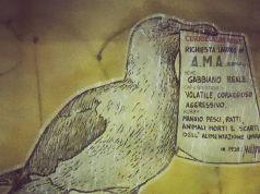 Seagull seeks job at Rome's rubbish agency