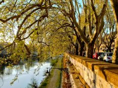 The trees of Rome