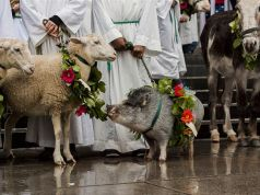 Blessing of the animals ceremony in Rome