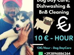 Cleaning - Dog Care - Dishwashing