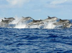 Group of 25 dolphins seen off Rome coast