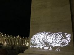 Cat light shows on Rome monuments