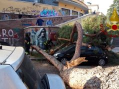 Huge pine tree falls in Garbatella area of Rome