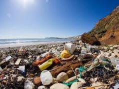 Retake Roma cleans up coast near Rome