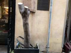 Rome: Via Margutta loses its landmark fig tree
