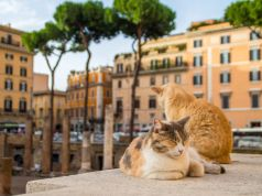 Cats of Rome: How to help Torre Argentina cat sanctuary