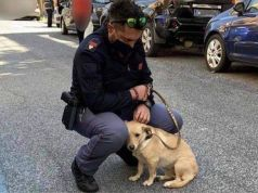 Rome policeman adopts puppy abandoned under hot sun