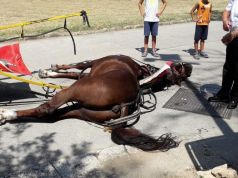Italy: Horse dies pulling tourists at Royal Palace of Caserta