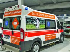 Rome's veterinary ambulance essential as covid numbers rise