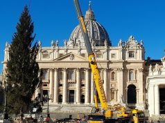 Vatican lights up Christmas tree in St Peter's Square