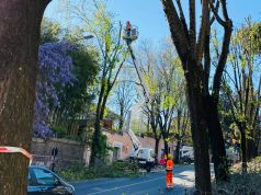 Rome environmental groups slam tree pruning in nesting season