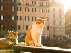 What will happen to Rome's cats at Largo Argentina?