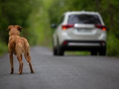 Rome mayor urges residents not to abandon pets this summer