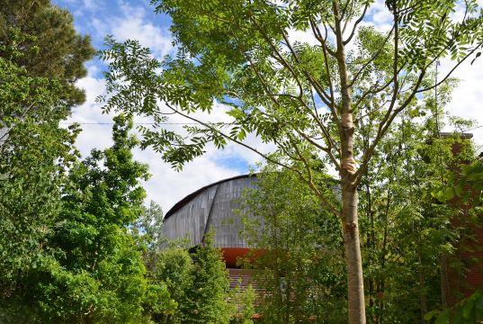 Rome auditorium transforms into forest