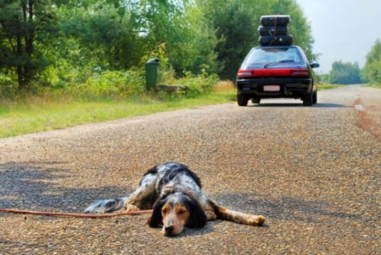 Rome residents urged not to abandon dogs