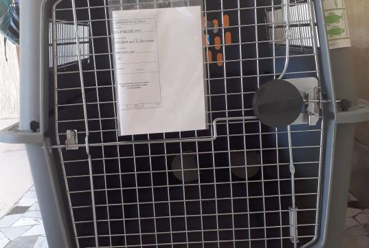 DOG TRANSPORT CRATE Petmate Sky Kennel  XL IATA APPROVED