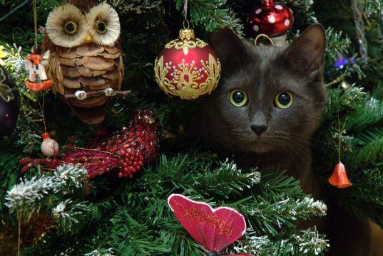 Christmas market at Rome cat sanctuary