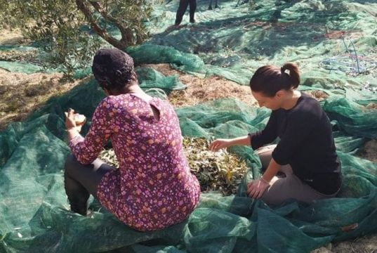 Olive oil production in Molise helps fight violence against women