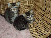 Two Kitties.