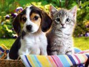 Cat Sitter - Dog Walker.