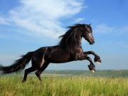 Horses and Ponies for loan