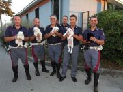 Smuggled puppies seized by police