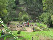 Ancient Roman gardening