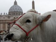 Blessing of the animals in St Peter's Square