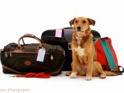 Dog sitter for tourists venice