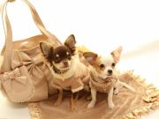 Luxury pet store opens in Rome