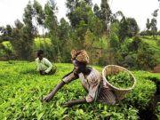 FAO reports progress in eradicating hunger