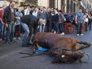 Horse collapses in central Rome