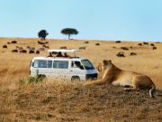 24/7/365-Kenya Tanzania Lodge/Camping safari-2015/16
