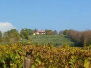 Villa With Olive Grove and Vineyard, Sabina, Lazio