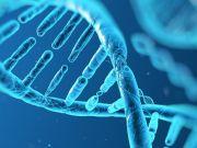 DNA: Il grande libro della vita da Mendel alla genomica