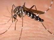 Rome disinfects against chikungunya virus