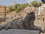 Rome's cat sanctuary