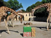 Christmas discount at Rome's Bioparco