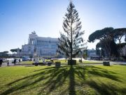 Rome's Christmas tree sparks debate