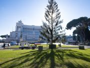 Rome's 'mangy' Christmas tree gets new life