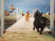 Rome's dog beach reopens for summer