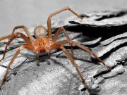 Alarm over venomous spiders in Rome