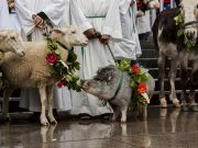 Blessing of the animals ceremony at St Peter's