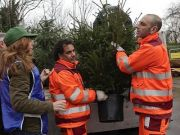 Rome recycles Christmas trees
