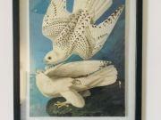 Various Framed Artwork for Sale