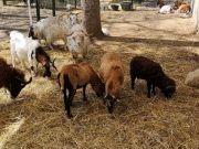 Rome opens children's farm on the Tiber