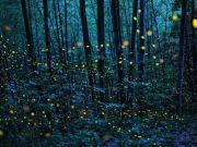 Firefly tours of Rome's Caffarella park