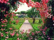 The story of Rome's rose garden