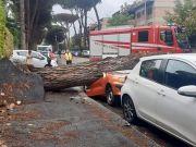 Falling tree flattens car in Rome